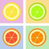 citrus ilustración del vector