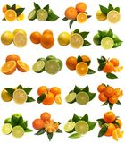Citrus for all tastes Royalty Free Stock Photos