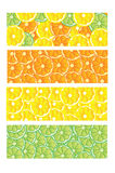 Citrus Fruit Slices Banner Designs Royalty Free Stock Images