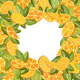 Citrus background Stock Images