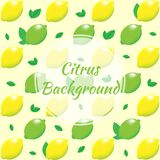 Citrus background. Lemon and lime with leaves. Vector illustration Stock Images