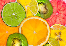 Citrus Backlit Stock Photography