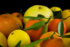 Citrus on black. Citrus fruits on black background Royalty Free Stock Photos