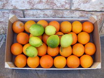 Citrus in a box Royalty Free Stock Photo