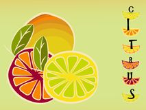 Citrus bright vintage sign. Old style Royalty Free Stock Photography