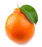 Citrus close up Stock Image
