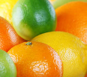 Citrus collection Stock Photos