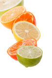 Citrus collection Royalty Free Stock Images