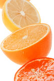 Citrus collection Royalty Free Stock Photography