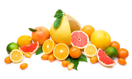 Citrus collection. Isolated on white Stock Photo