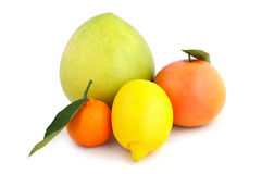 Citrus collection Stock Images
