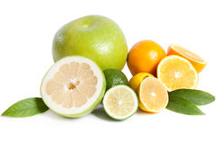 Citrus collection Royalty Free Stock Photo