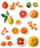 Citrus collection. Miscellaneous citrus fruits on white background. See more citrus images in this series in my portfolio stock image