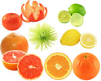 Citrus Collection. Group of citrus fruit isolated on white background Stock Photography