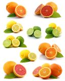 Citrus collection Stock Photography