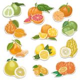 Citrus collection on tags Royalty Free Stock Images