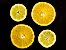 Citrus composition Stock Photos