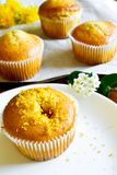 Citrus cupcakes Stock Photos