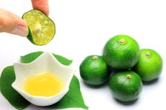 Free Citrus Depressa Royalty Free Stock Photos - 26589788