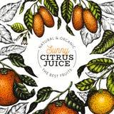 Citrus designtemplete För vektorfärg för hand utdragen illustration för frukt Inristat stilbaner Citrus ram för tappning stock illustrationer