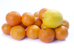 Citrus Different Royalty Free Stock Photos
