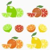 citrus E r Vector libre illustration