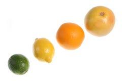 The Citrus Family. Grapefruit, orange, lemon and lime fruits isolated on white Stock Image