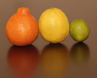 A Citrus Family. Three different kinds of citrus fruits together Royalty Free Stock Photo