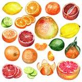 Citrus fastställd vattenfärg vektor illustrationer