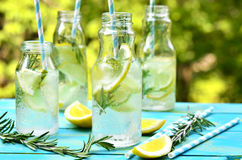 Citrus fizz with rosemary. Royalty Free Stock Photography