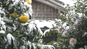 Citrus and flower with snowfall stock video