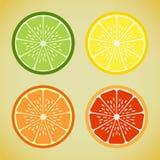 Citrus. Four slices of citrus, lime, orange, lemon, grapefruit Royalty Free Stock Photos