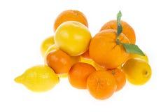 Citrus fresh fruit isolated Royalty Free Stock Images