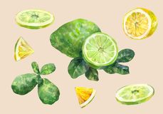 citrus fruit Λεμόνι και ασβέστης Τεμαχισμένος και ολόκληρος καθορισμένο watercolor ελεύθερη απεικόνιση δικαιώματος
