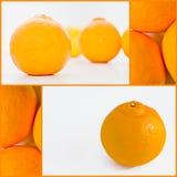 Citrus fruit Royalty Free Stock Image