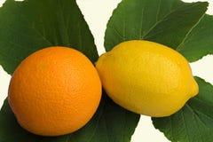Citrus Fruit. Orange & Lemon arranged on Witch-hazel leaves Stock Images