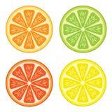 Citrus fruit Stock Photography