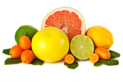 Citrus fruit. Stock Photography