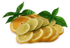 Citrus Fruit. Sliced Oranges, lemons and limes Royalty Free Stock Photo