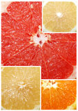 Citrus fruit Royalty Free Stock Photo