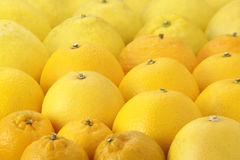 Citrus fruit Royalty Free Stock Images