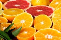 citrus fruit Στοκ Φωτογραφία