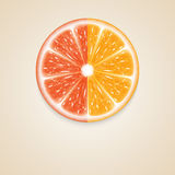 citrus fruit απεικόνιση αποθεμάτων