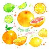 citrus fruit διανυσματική απεικόνιση
