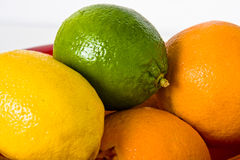 Citrus fruit. In a bowl on a white background Royalty Free Stock Photography