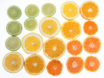 Citrus fruit arranged in a tonal color gradient on white backgro Stock Image