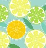 Citrus fruit on black background Stock Photography