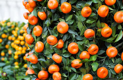 Citrus Fruit for chinese new year Stock Photo