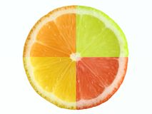 Citrus fruit and clipping path. Four different citrus fruit. Clipping path Royalty Free Stock Image