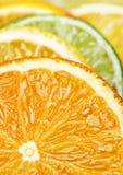 Citrus fruit closeup Stock Photos